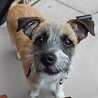 Lilly, the Jack Russell Terrior by MartynJames