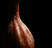First fig this year by Yool