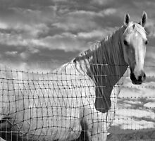 White and Black Beauty by Sue  Cullumber