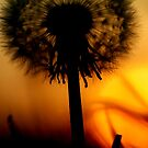 Dandylion sunset... by TonyLegg