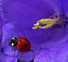 Colorful in the land of ladybirds by Frevik