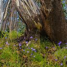 Bluebells and Snow Gum. by Bette Devine