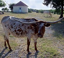 Texas Longhorn I by Glenna Walker