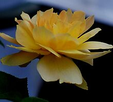Floating on yellow by Starling