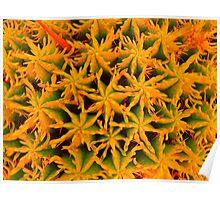 orange star pattern Poster