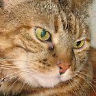 Cat Happy Birthday by Donna Grayson
