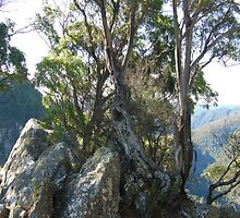 Leven Canyon by JuliaWright
