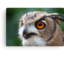 17 Week Old Turkmenian Eagle Owl Canvas Print