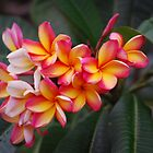 Frangipani by Fred  Smith