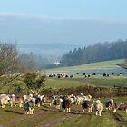 Herdwick sheep grazing in winter by Judi Lion