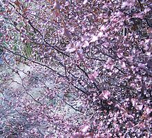 Cherry Blossom relation by Cassandra