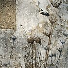Wall with plants - 2008 by Gwenn Seemel