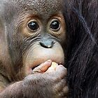 Baby Orangutan by JulieM