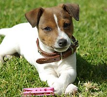 """Patch the Puppy -  """"Cute"""" by Joanna Roser"""