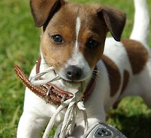 """Patch the Puppy - """"Caught in the act"""" by Joanna Roser"""