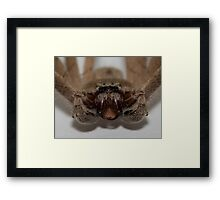 Spider Stare Down Framed Print