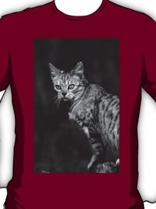 """Chat - Cat """" Peluche """" 05 (c)(h) ) by Olao-Olavia / Okaio Créations 300mm f.2.8 canon eos 5 1989 T-Shirt"""