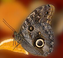 Butterfly and Citrus by Bonnie T.  Barry