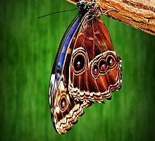 Hanging around. by ScenicViewPics