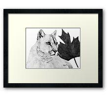 Canadian Cougar Framed Print