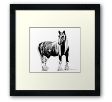 Draft Horse Framed Print