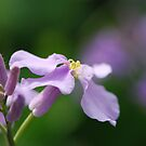 Purple Flower by ssphotographics