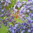 bee in heaven by ssphotographics