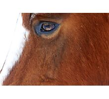Big Brown Eyed Gal Photographic Print