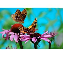 BFF Best Friend Fritillaries  Photographic Print