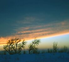 A Unique Winter Sunset Silhouettes Barren Trees. by SteveOhlsen