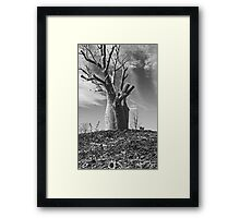 Boab Tree  Framed Print