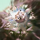 Passion Flower by Paul Fleetham