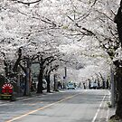 Cherry Blossom by ssphotographics