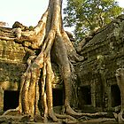 Ancient Tree at Ta Phrom by fatfatin