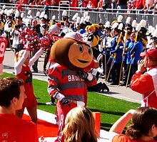 Brutus Buckeye by Rachel Counts