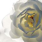 White Rose by Deanna Gardam