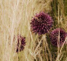 Hide in the grass by Karen  Betts