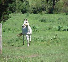 White Horse Running by Sharon Robertson