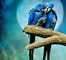 My Blue Heaven by Tarrby
