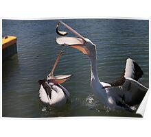 Port Hughes Pelicans Poster