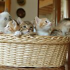 a basket of kitties by elisaperusin