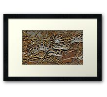 Two Southern Hog-nosed Snakes  Framed Print