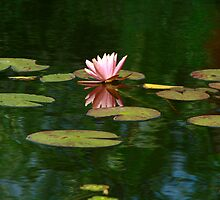 Pink Lilly by Deborah  Benoit