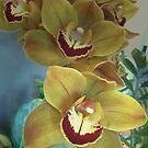 Orchid Spray by Monnie Ryan