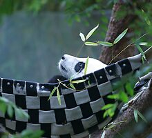 Panda in a sling by Dennis  Greenhill