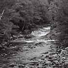 Haliburton Highlands  by sircamzalot