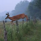 Fence Jumper by Mountaineer