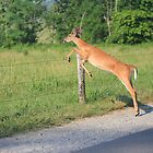 Young buck jumping fence by Mountaineer