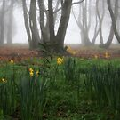 Winter daffodils by Robyn Lakeman