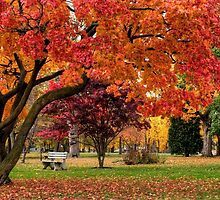 Autumn Walk In The Park by Gene Walls